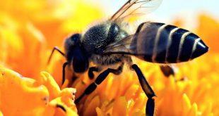 Voi sapete che le api comunicano con la danza