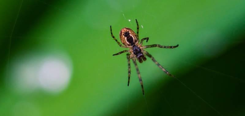 Sapete che i ragni non sono insetti
